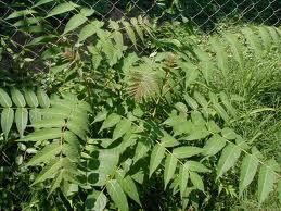 6_plant 6